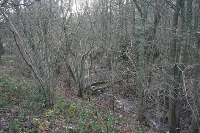 Boggy hollow in Spanden Wood