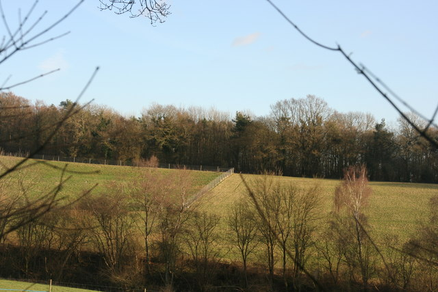 Looking across from Spanden Wood to Minepit Wood