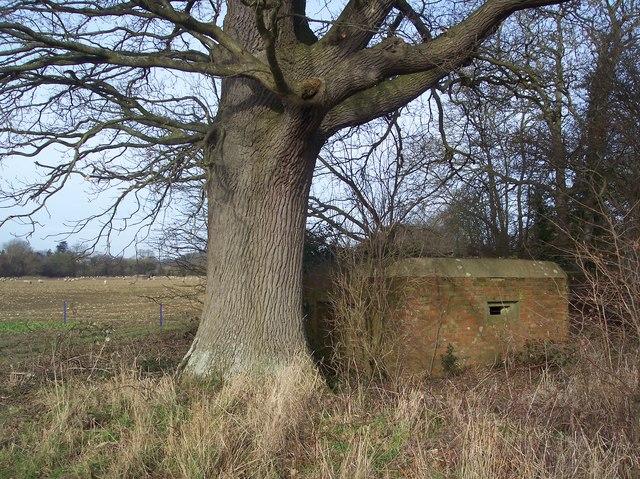 Pillbox and tree near Penshurst
