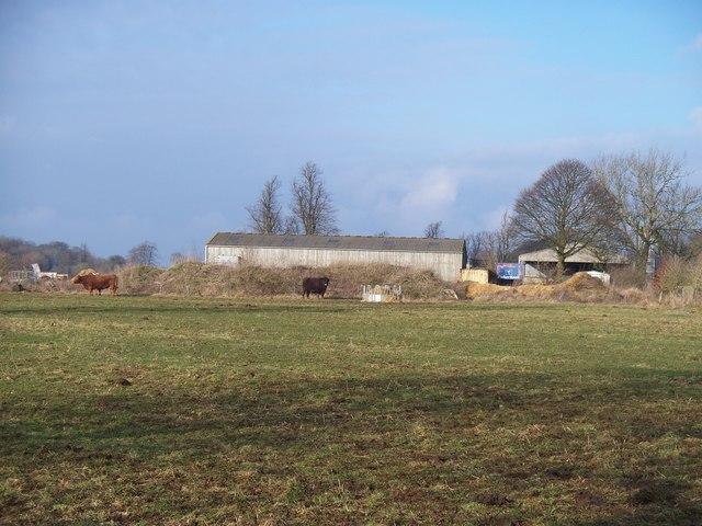 Barns and bulls