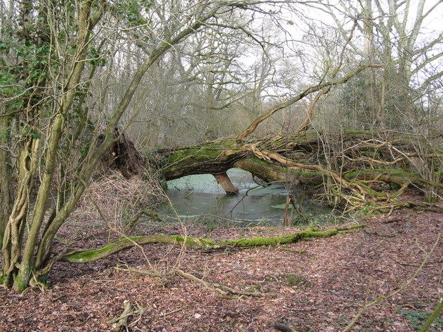 Fallen tree in stagnant pond