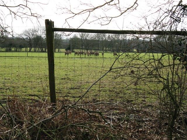 Deer near Granary Farm