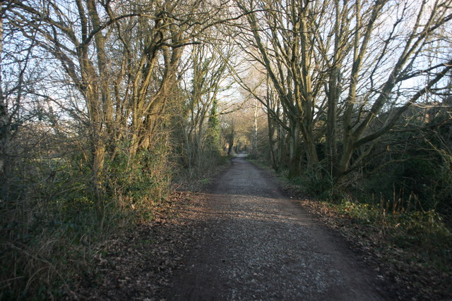 Forest Way