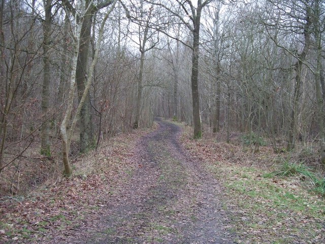 Track in  the woods