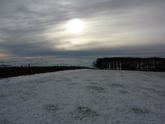 Shelter belt around Moor Grange Farm