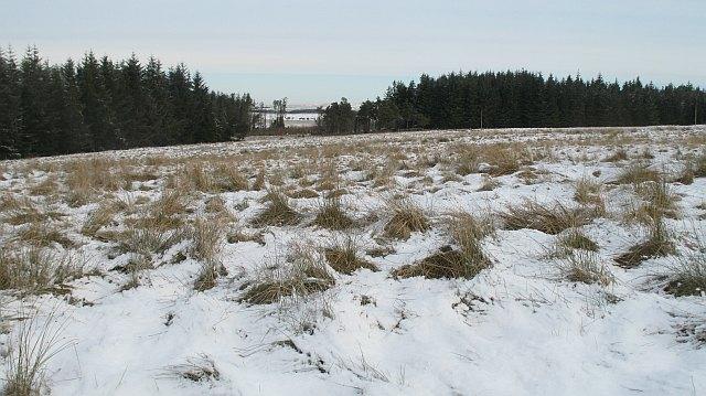 Rough grazing, Colzium