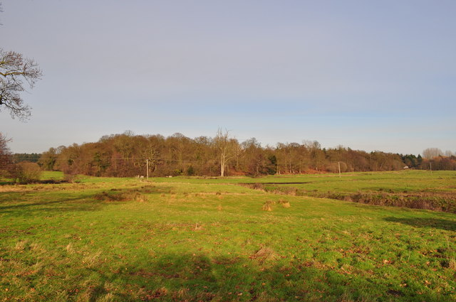 Looking to the Grazing land