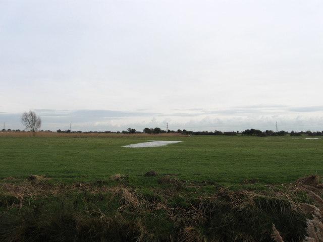 Great Widear Marsh