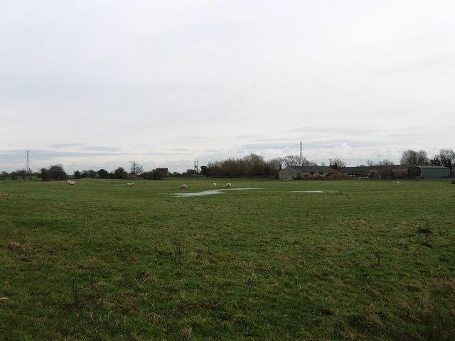Rickney Marsh