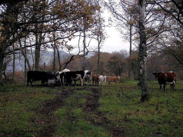 Woodland Pasture, Abbotsmoss