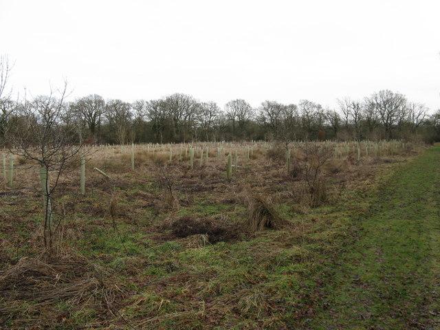 Small plantation near Oldhouse Farm