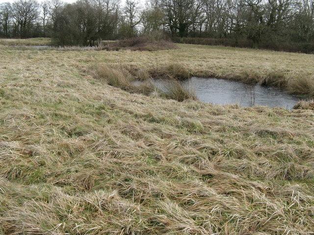 Frozen ponds in rough pasture near Oldhouse Farm