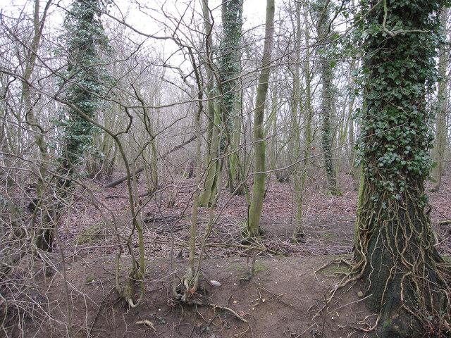 Woodland at Sluggs Green