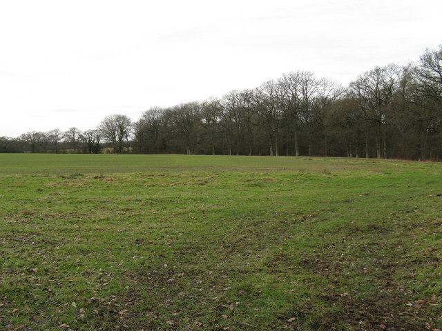 Court Plantation east of Court Farm
