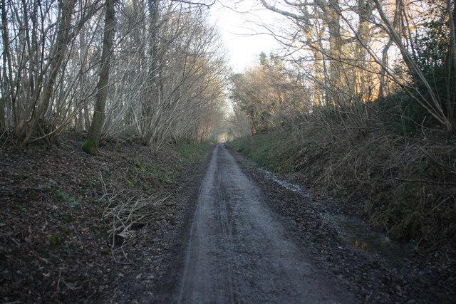 Forest Way, Alder Shaw