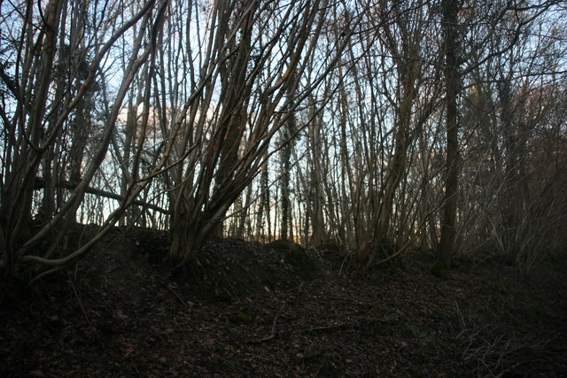 Coppiced trees, Alder Shaw