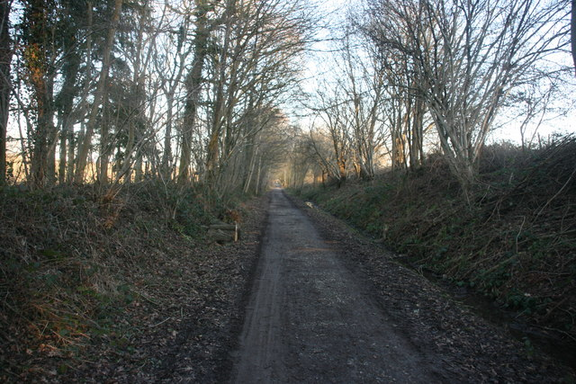 Forest Way, Alder Shaw