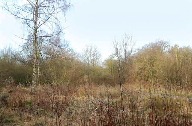 Wooded trackbed of the ex-Great Central Railway, Rugby