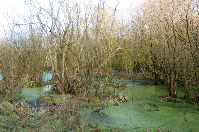 Waterlogged cutting of ex-Great Central Railway, Rugby