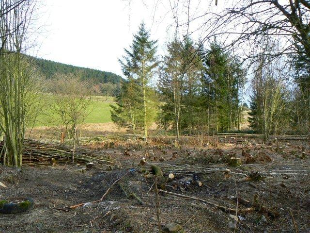 Benarty Wood