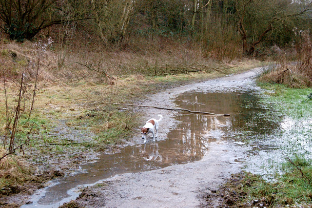 Muddy patch in a cutting of  the ex-Great Central Railway, Rugby