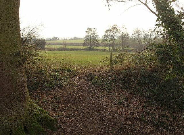 Towards the Durleigh Brook