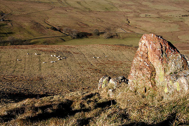 Sheep on Burgh Hill