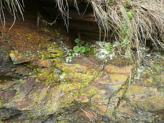 Micro-landscape on the cliff face