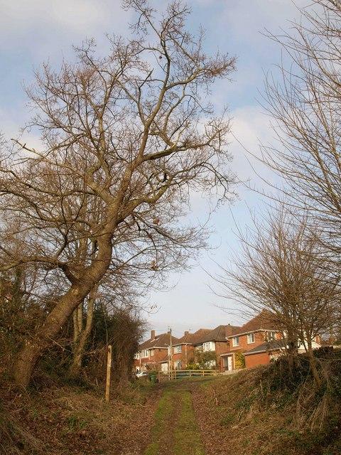 Haygrove Lane