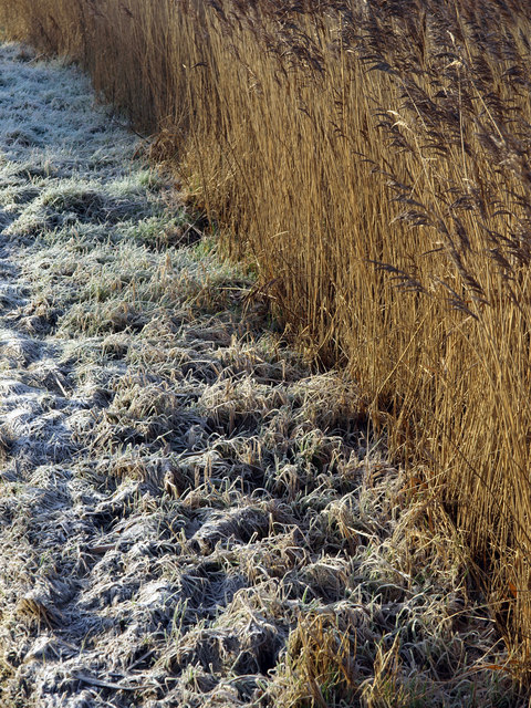 Frost 'n' Reeds