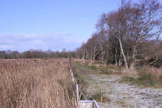 Non-existent woods, Cors Fochno.