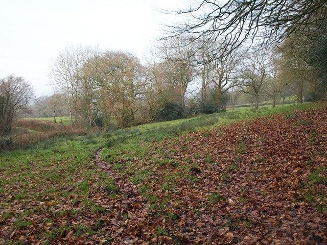 Field on Wellington Hill
