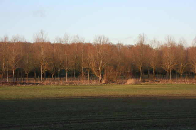 Woodland north of Forest Way