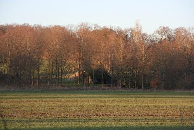 Lower Parrock Wood