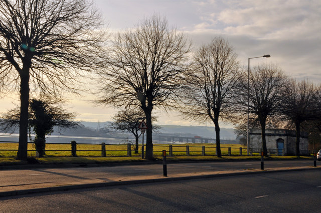 Trees on Embankment Road - Plymouth
