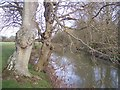 TQ5445 : River Medway flowing downstream by David Anstiss