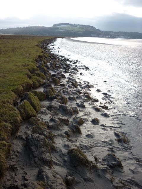 Edge of the saltmarsh, Fishcarling Head, Kent estuary