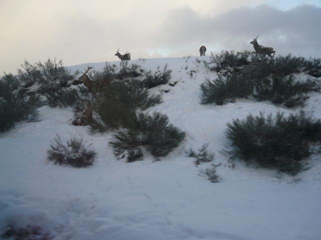 Deer on the railway embankment