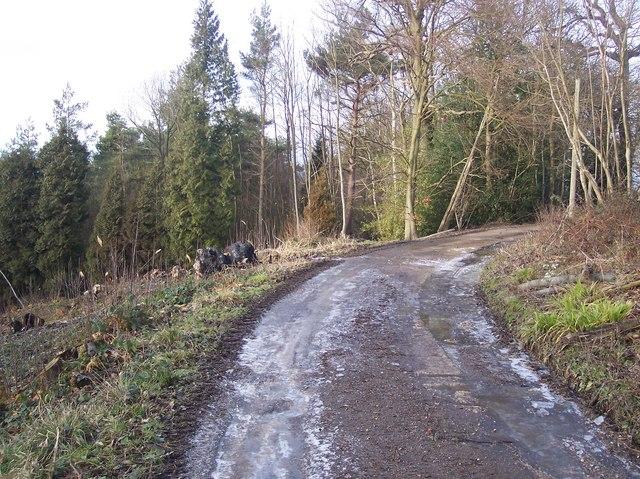 Bridleway in Ashour Wood