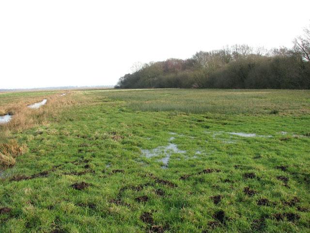 Marsh pastures north of Claxton