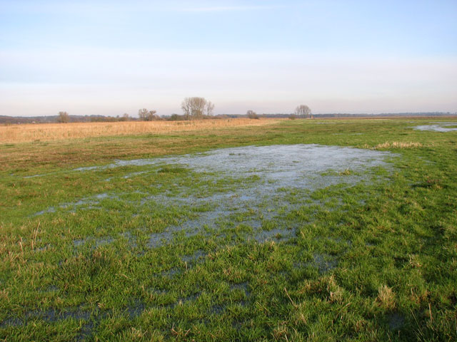 Waterlogged marsh pastures south of Short Dike
