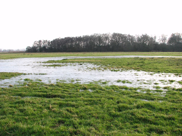Ice-covered puddles in pastures north of Claxton