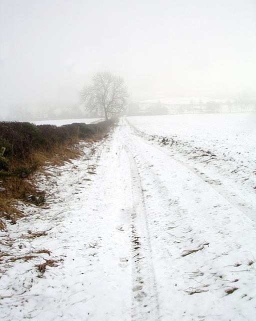 Bridleway towards Newsham Lodge