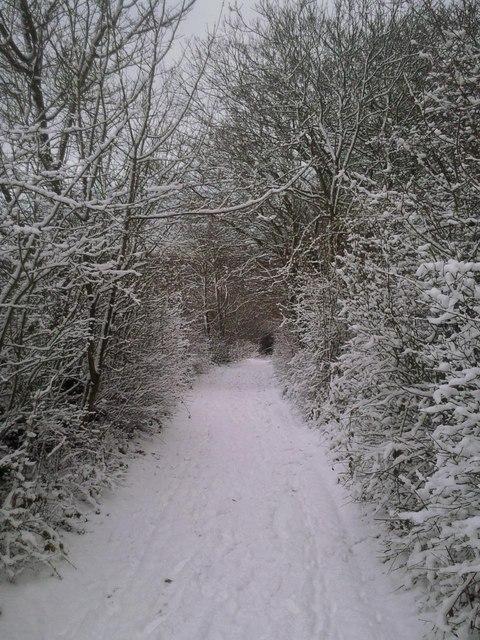 Snowy trackway on Woodlands Farm