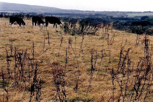 Cregneash Village - Farm fields south of the village