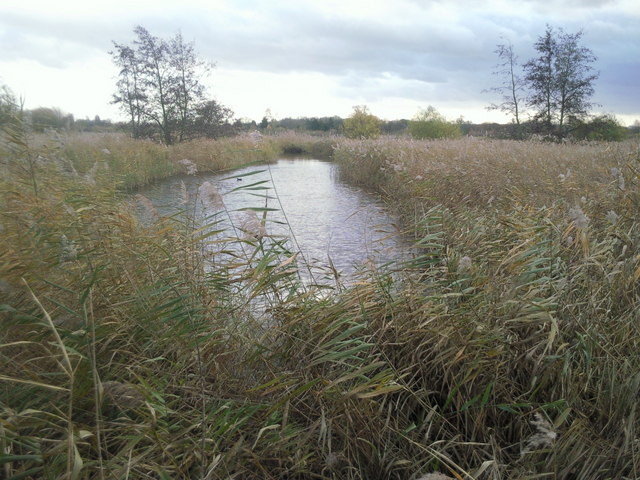 London Wetland Centre in late autumn