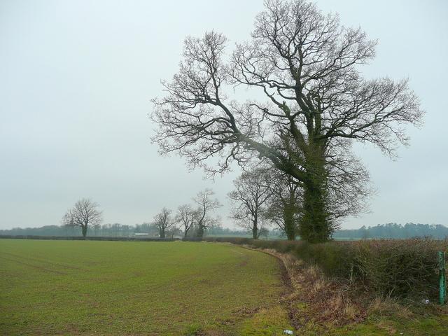 Field edge near Ashby Grange
