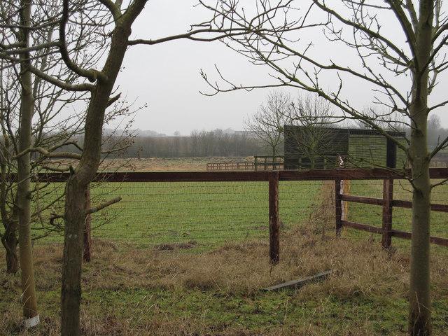 Stud Farm