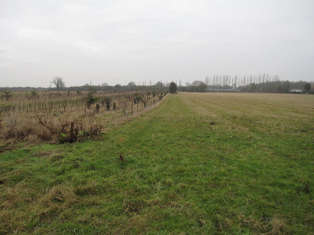 Grassy area and new woodland