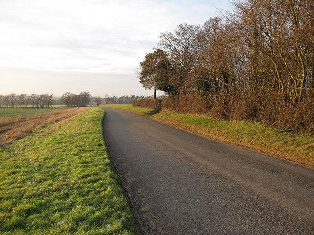 Road past Fir Bush